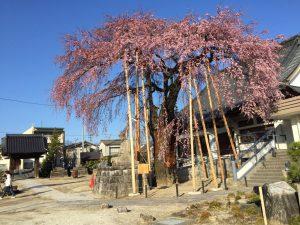 専照寺(長野県飯田市)